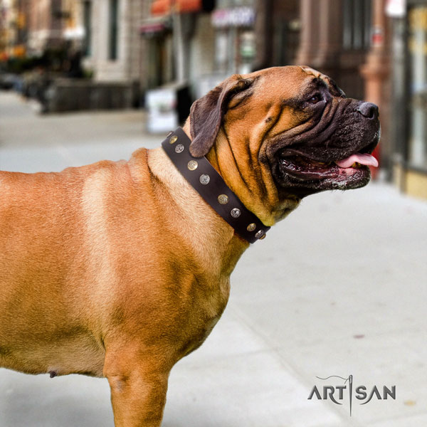 Bullmastiff comfy wearing dog collar of exceptional quality natural leather