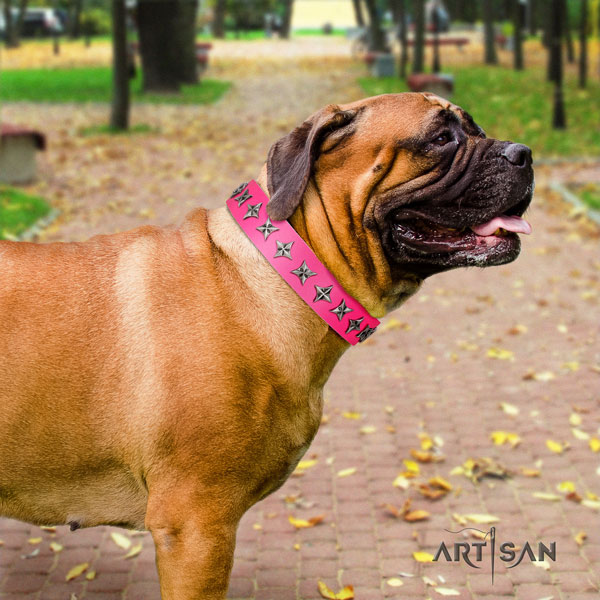 Bullmastiff comfy wearing dog collar of extraordinary quality natural leather