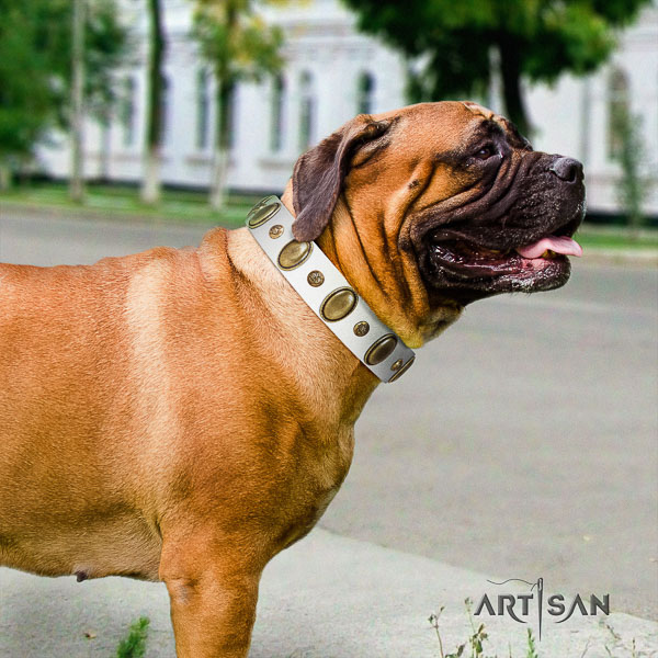 Bullmastiff comfortable wearing full grain leather collar with decorations for your doggie