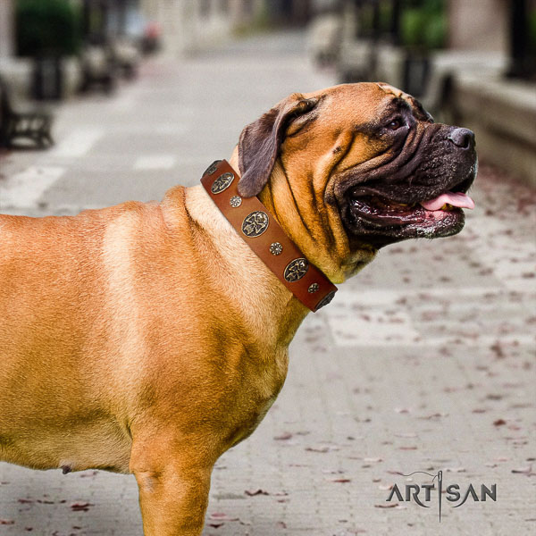 Bullmastiff daily walking natural leather collar with adornments for your four-legged friend