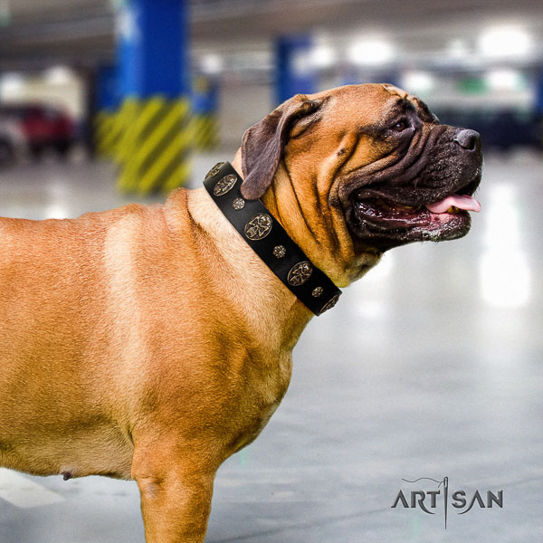 Bullmastiff basic training full grain natural leather collar with adornments for your pet