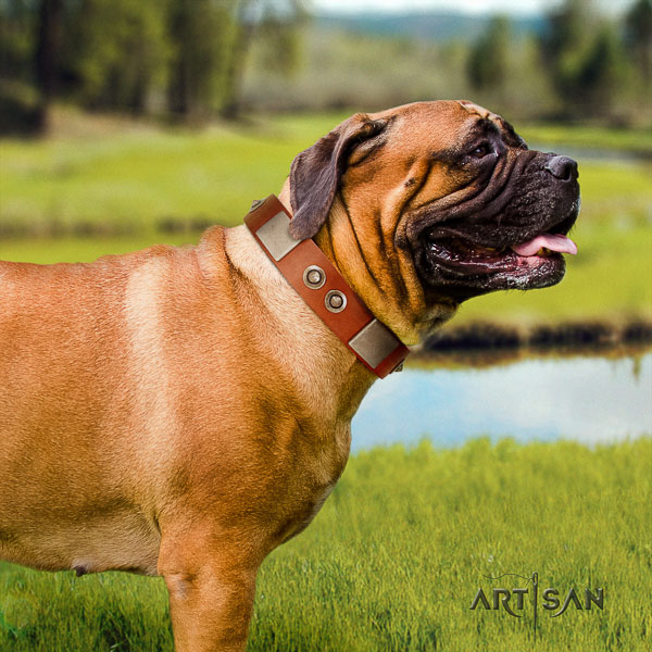Bullmastiff daily use genuine leather collar with studs for your four-legged friend