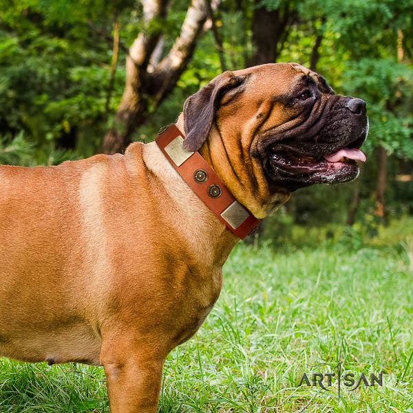 Bullmastiff stylish walking full grain natural leather collar with decorations for your pet
