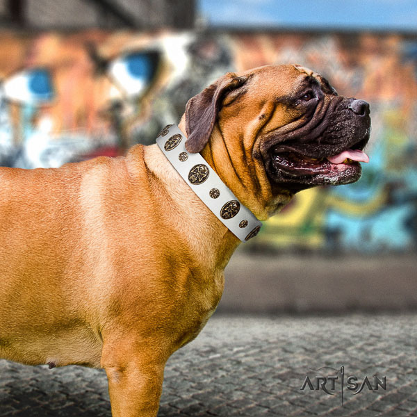 Bullmastiff everyday walking genuine leather collar with adornments for your dog