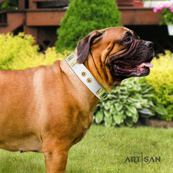 Bullmastiff daily walking genuine leather collar with embellishments for your four-legged friend