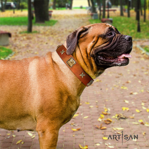 Bullmastiff easy wearing full grain genuine leather collar with adornments for your pet