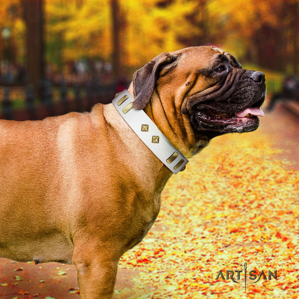 Bullmastiff daily walking leather collar with embellishments for your four-legged friend