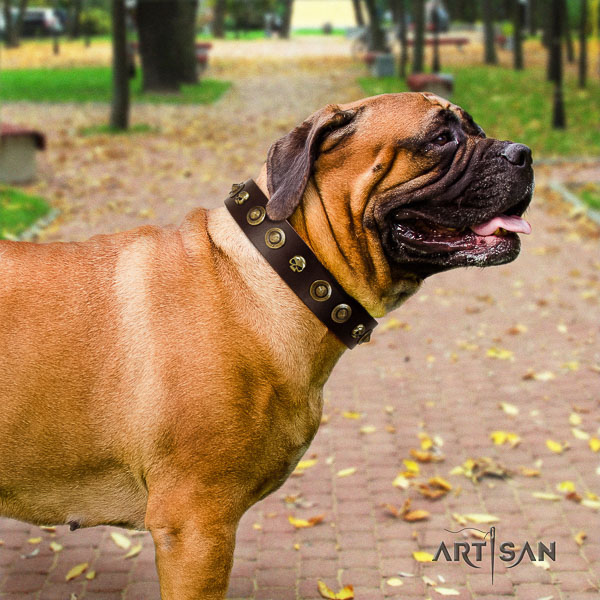 Bullmastiff comfy wearing natural leather collar with decorations for your dog