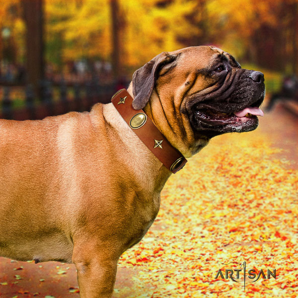 Bullmastiff fancy walking natural leather collar with studs for your pet