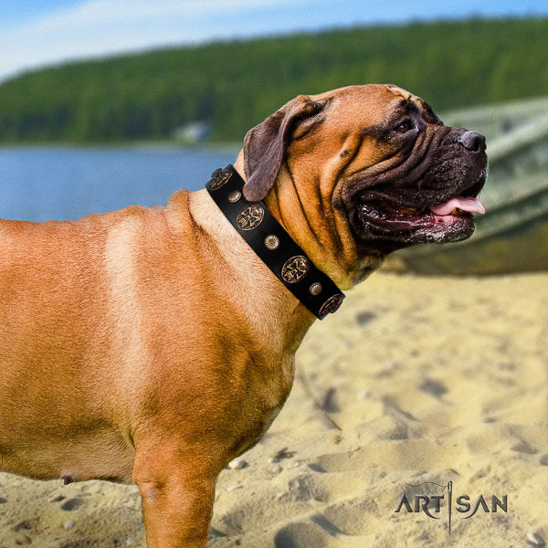 Bullmastiff comfy wearing full grain genuine leather collar with adornments for your four-legged friend