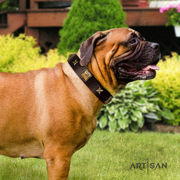 Bullmastiff fancy walking leather collar with adornments for your canine