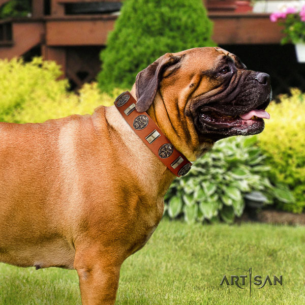 Bullmastiff everyday use full grain leather collar with adornments for your pet