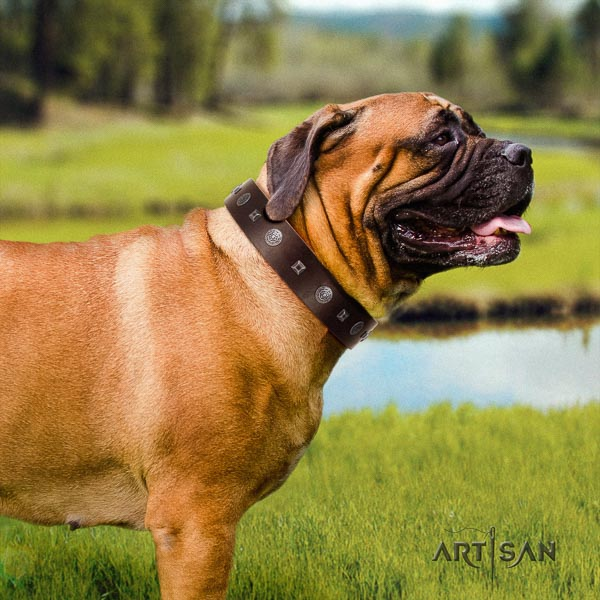 Bullmastiff fine quality full grain natural leather collar with embellishments for your dog