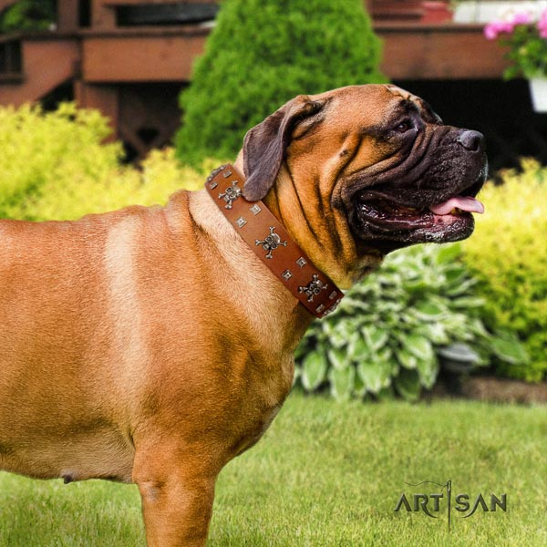 Bullmastiff full grain genuine leather dog collar with embellishments for your impressive four-legged friend