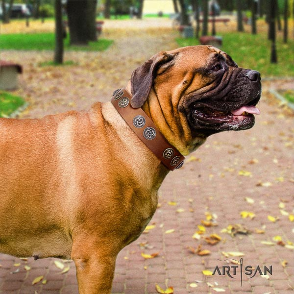 Bullmastiff stunning full grain leather collar with studs for your doggie