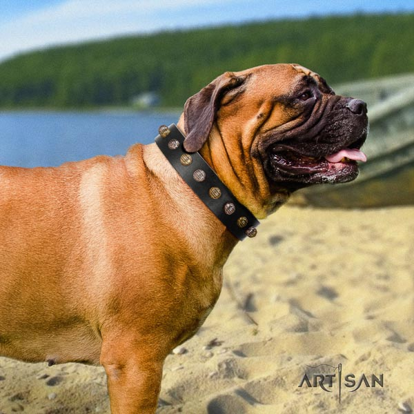 Bullmastiff top quality leather collar with adornments for your four-legged friend