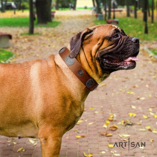 Bullmastiff full grain leather dog collar with studs for your handsome dog