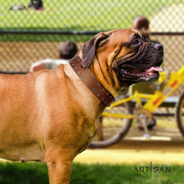 Bullmastiff top notch full grain natural leather collar with studs for your four-legged friend