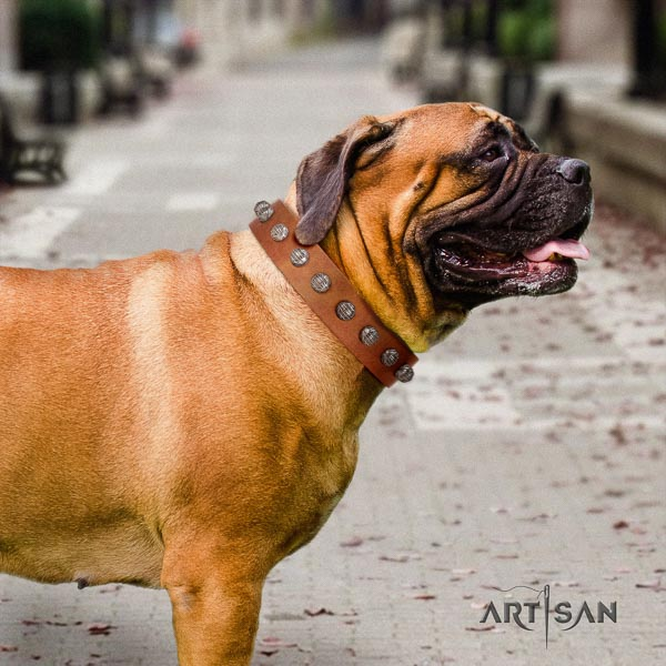 Bullmastiff trendy full grain genuine leather collar with adornments for your dog
