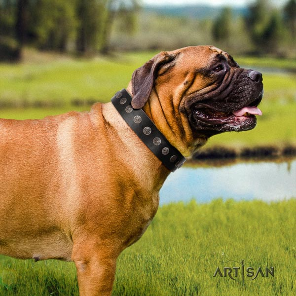 Bullmastiff extraordinary leather collar with embellishments for your four-legged friend
