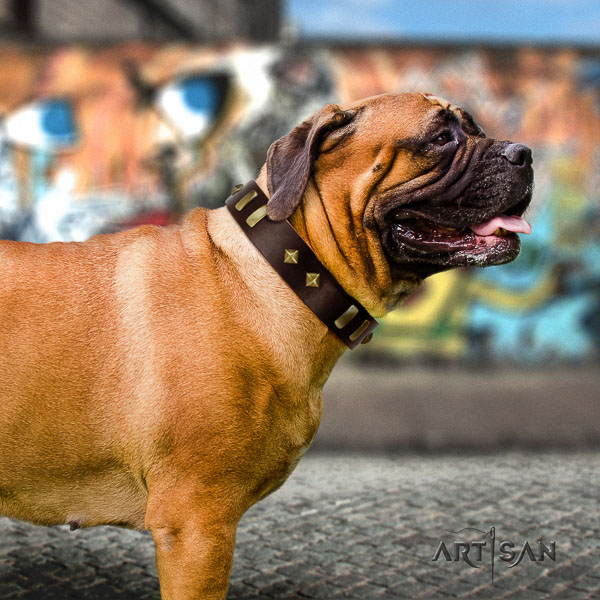 Bullmastiff comfortable wearing genuine leather collar with decorations for your dog