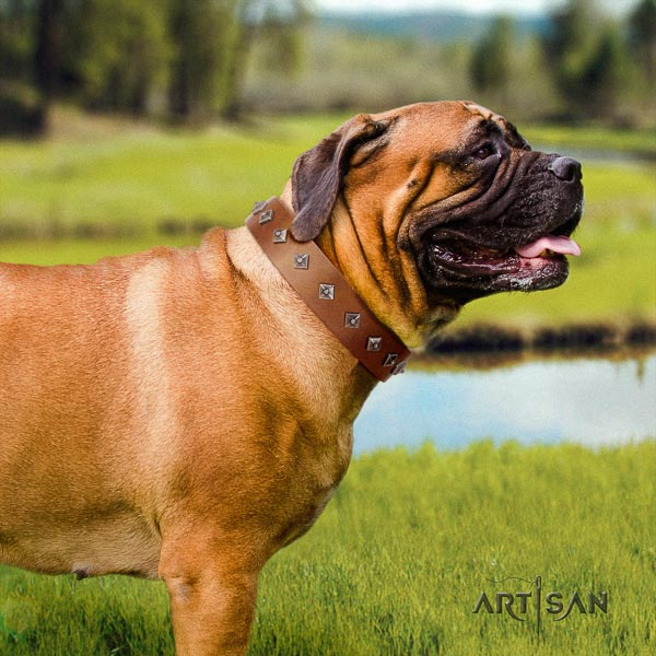 Bullmastiff stylish full grain natural leather collar with embellishments for your canine