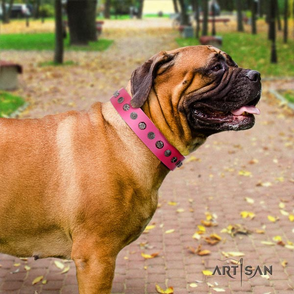 Bullmastiff stunning genuine leather collar with decorations for your pet