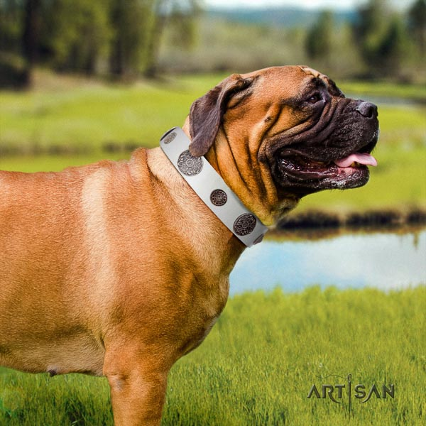Bullmastiff full grain genuine leather dog collar with adornments for your stylish doggie