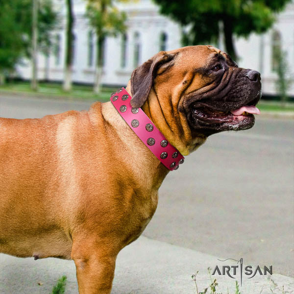 Bullmastiff exceptional full grain leather collar with studs for your four-legged friend
