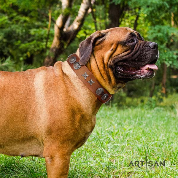 Bullmastiff amazing full grain leather collar with studs for your canine