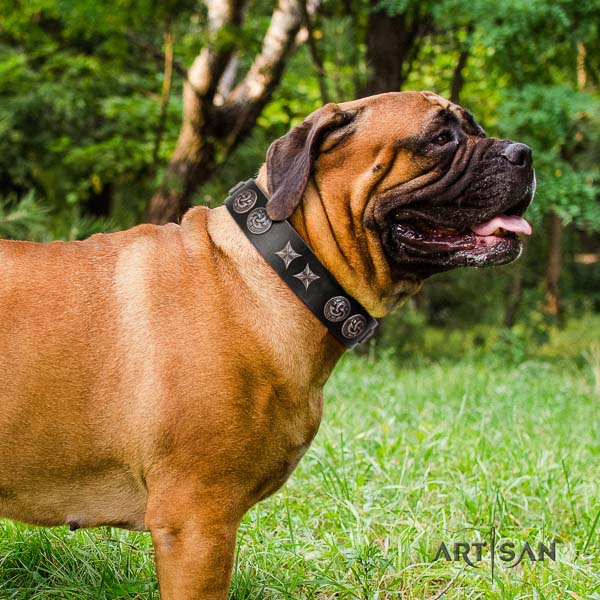 Bullmastiff incredible full grain leather collar with adornments for your doggie