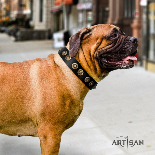 Bullmastiff walking full grain leather collar with studs for your doggie