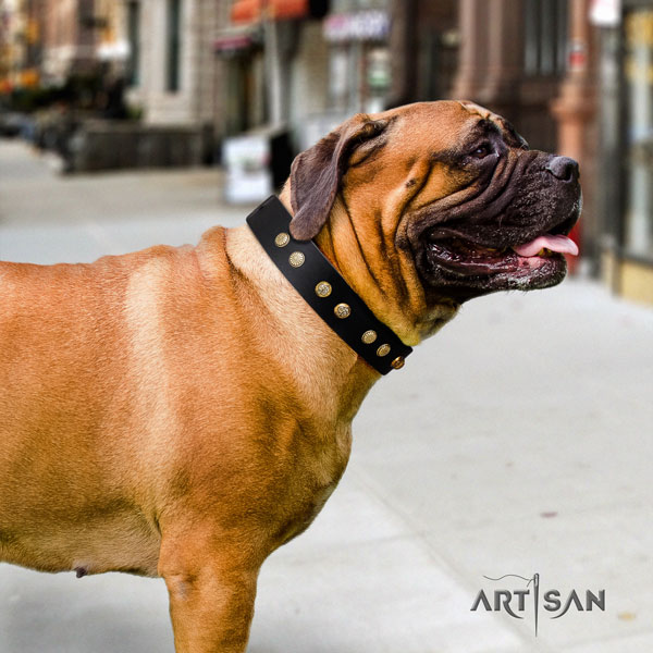 Bullmastiff everyday use dog collar of fine quality natural leather