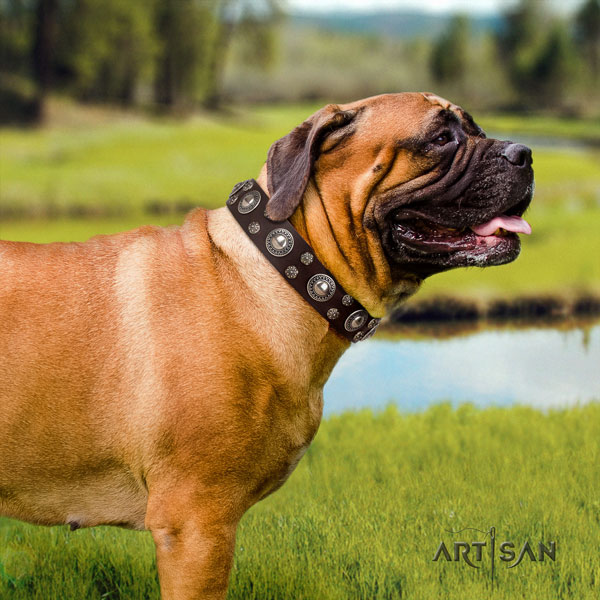 Bullmastiff easy wearing dog collar of incredible quality natural leather