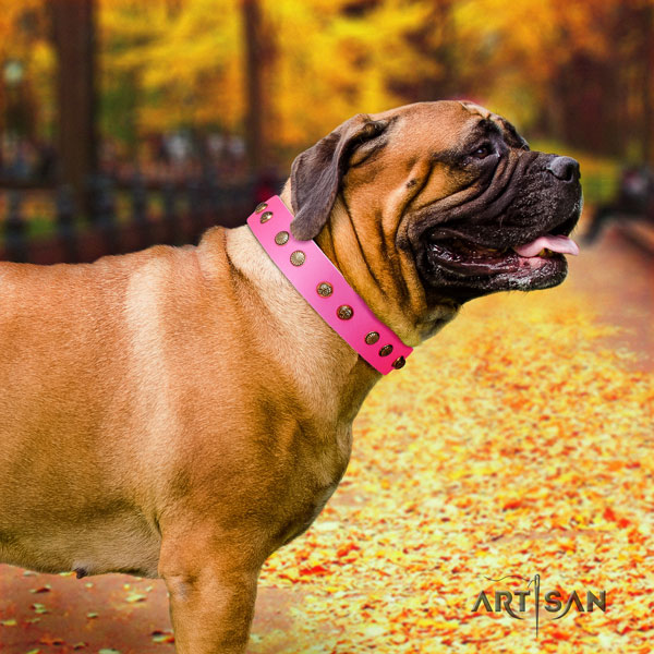 Bullmastiff daily use dog collar of comfortable genuine leather