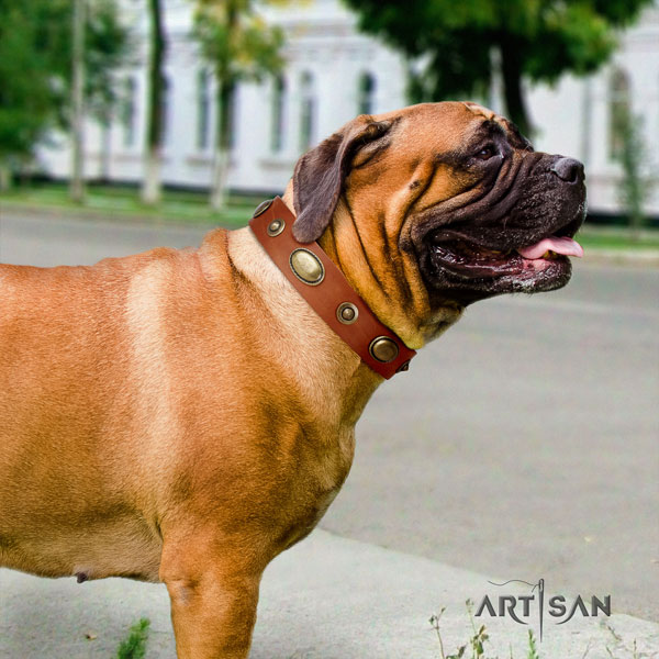 Bullmastiff comfortable wearing dog collar of stylish natural leather