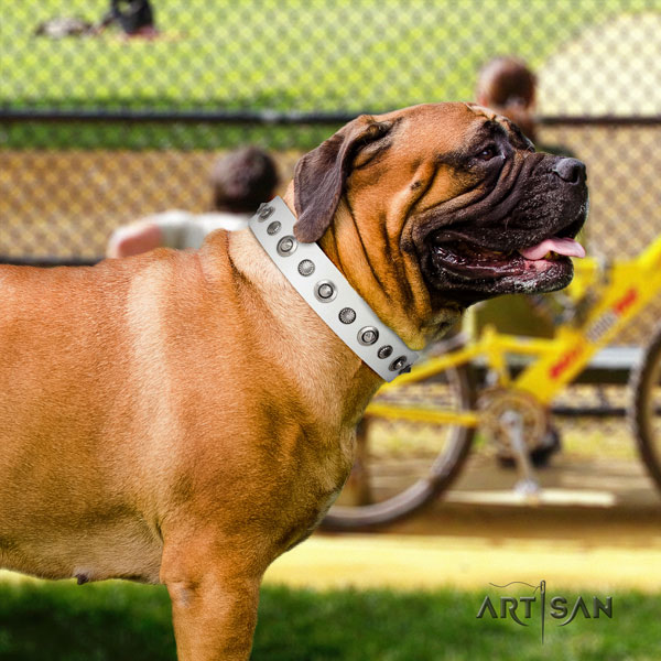 Bullmastiff basic training dog collar of remarkable quality natural leather