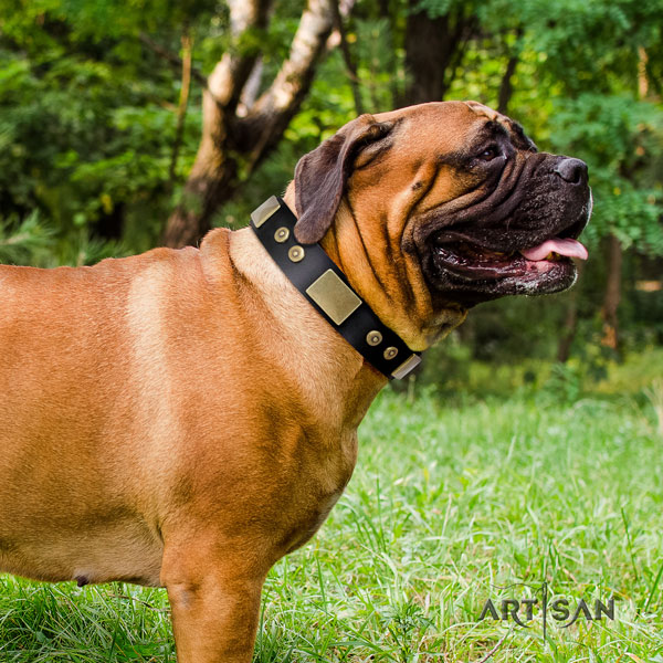 Bullmastiff everyday walking dog collar of significant quality natural leather