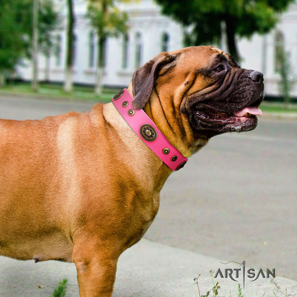 Bullmastiff stylish walking dog collar of significant quality genuine leather