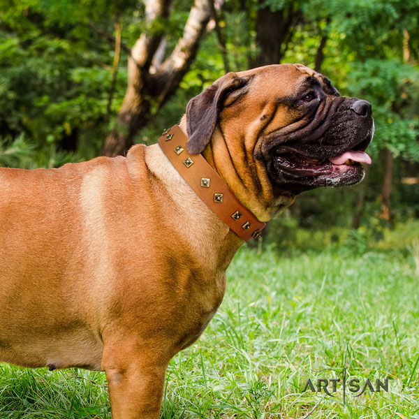 Bullmastiff basic training dog collar of top notch quality natural leather