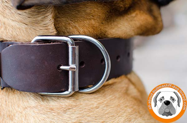 Bullmastiff leather collar wide decorated with spikes for daily walks