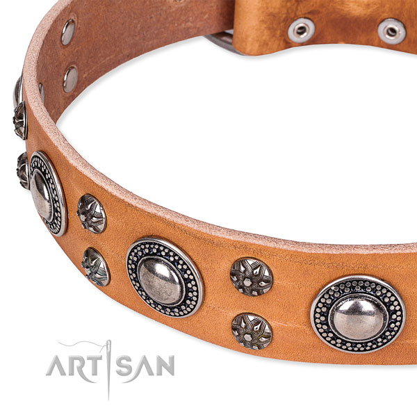 Daily walking full grain natural leather collar with rust resistant buckle and D-ring