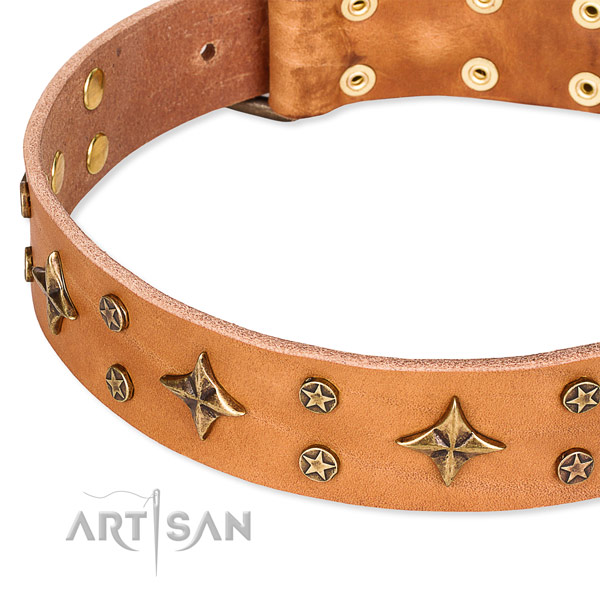 Full grain genuine leather dog collar with significant adornments