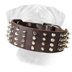 Adjustable Bullmastiff Leather Collar