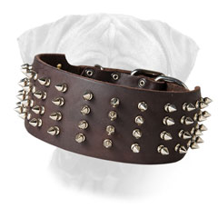 Spiked Bullmastiff Leather Collar Wide for Walking