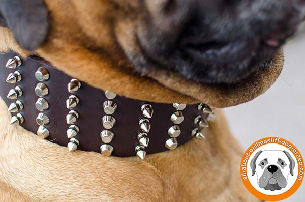 Adorned Bullmastiff leather collar for daily activities