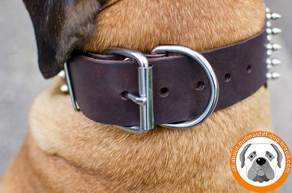 Awesome wide leather collar for active and strong Bullmastiff