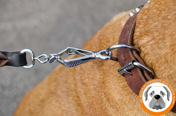 Durable and soft leather Bullmastiff collar with fancy adornment