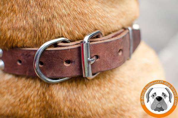 Beautiful leather Bullmastiff collar for daily activities