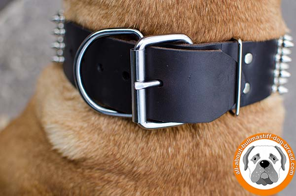 Fabulous leather Bullmastiff collar with nickel plated buckle
